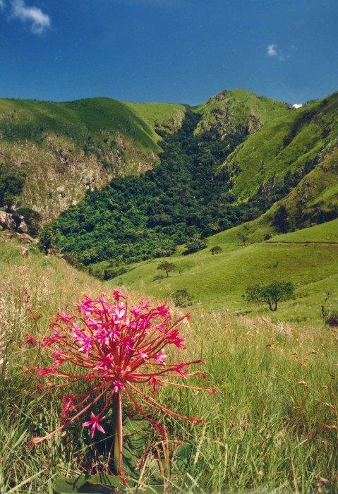 Südafrika Königreich Swaziland Iwanowskis Reisen - afrika.de