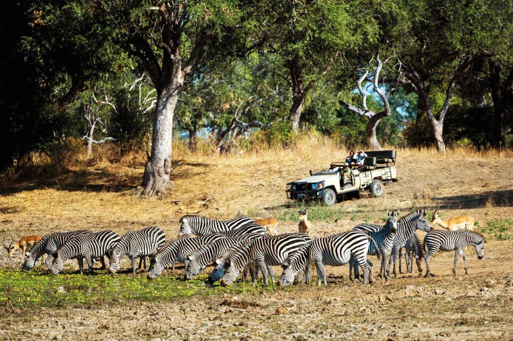 Sambia South Luangwa National Park Luangwa River Camp Pirschfahrt Iwanowskis Reisen - afrika.de