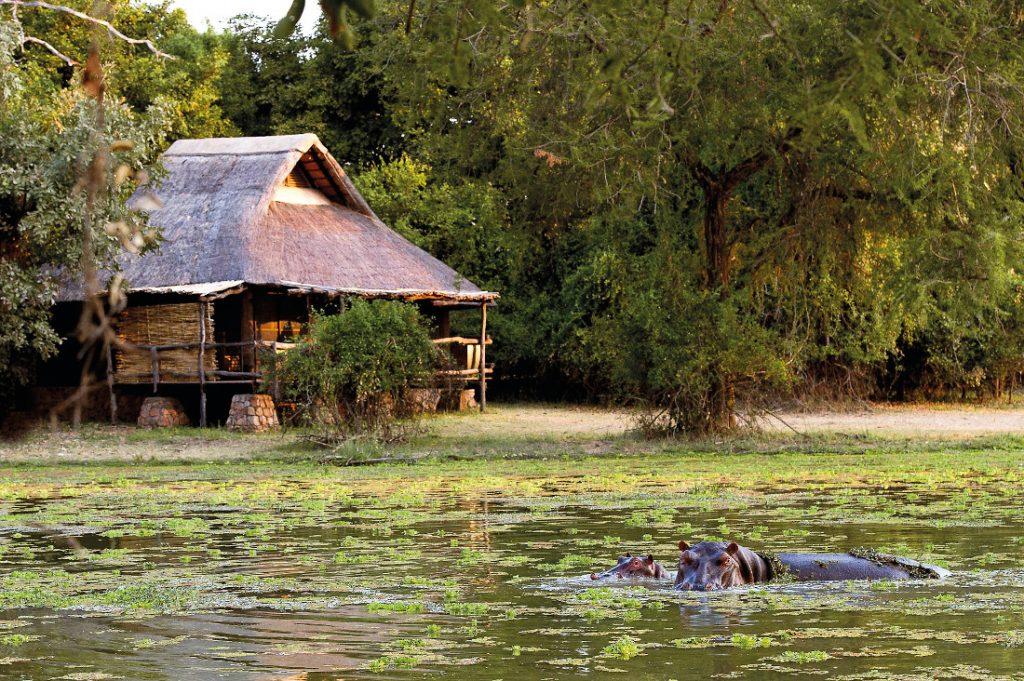 Sambia South Luangwa Mfuwe Lodge Iwanowskis Reisen - afrika.de