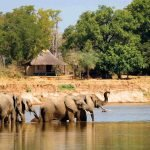 Sambia South Luangwa National Park Nsefu Bush Camp Iwanowskis Reisen - afrika.de