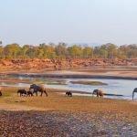 Malawi Sambia Safari Süd Luangwa National Park Iwanowskis Reisen - afrika.de