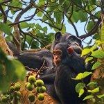 Uganda - die Perle Afrikas selbst erleben