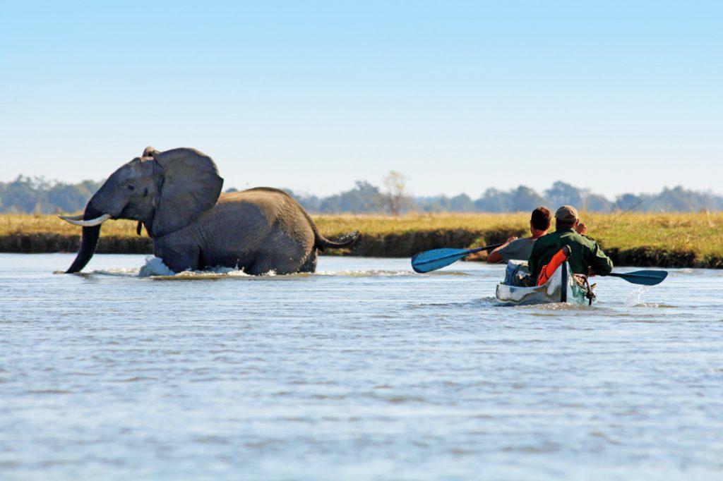 Simbabwe Mana Pools National Park Camp Zambezi Kanutour Iwanowskis Reisen - afrika.de