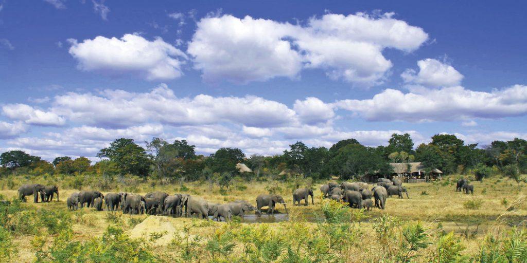 Simbabwe Hwange National Park Khulu Ivory Lodge Elefanten Iwanowskis Reisen - afrika.de