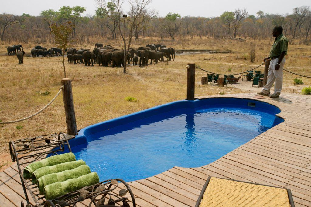 Simbabwe Hwange National Park Khulu Ivory Lodge Pool Iwanowskis Reisen - afrika.de