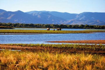 Simbabwe Mana Pools National Park Zambezi Fluss Iwanowskis Reisen - afrika.de