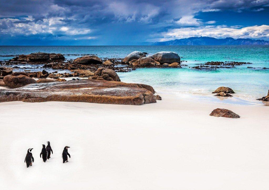 Suedafrika Rundreise Boulders Beach Pinguine Iwanowskis Reisen - afrika.de