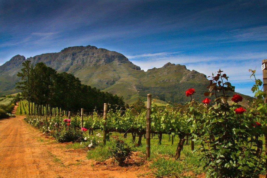 Suedafrika Rundreise Weinregion Weinberge Iwanowskis Reisen - afrika.de