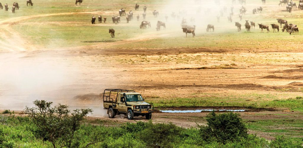 Tansania Serengeti National Park Pirschfahrt Iwanowskis Reisen - afrika.de