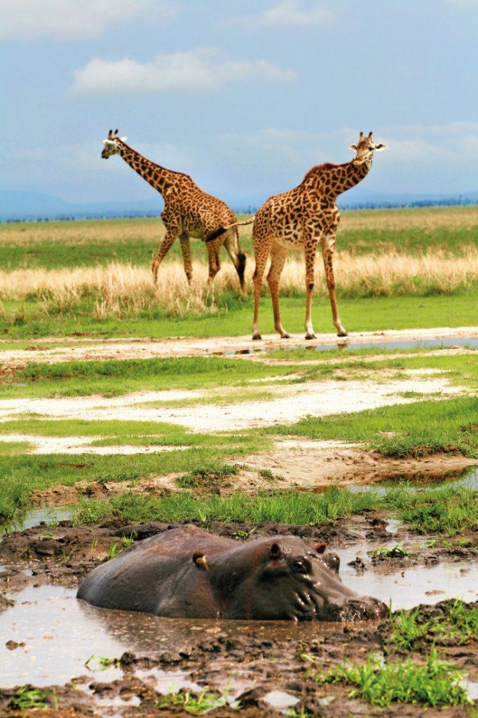 Tansania Katavi Nationalpark Wildlife Katuma Bush Lodge Iwanowskis Reisen - afrika.de