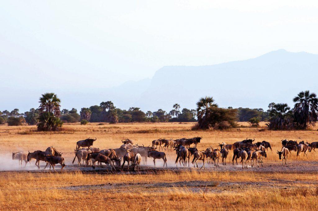 Tansania Serengeti National Park Kubu Kubu Lodge Pirschfahrt Iwanowskis Reisen - afrika.de