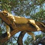 Tansania Safari & Kultur