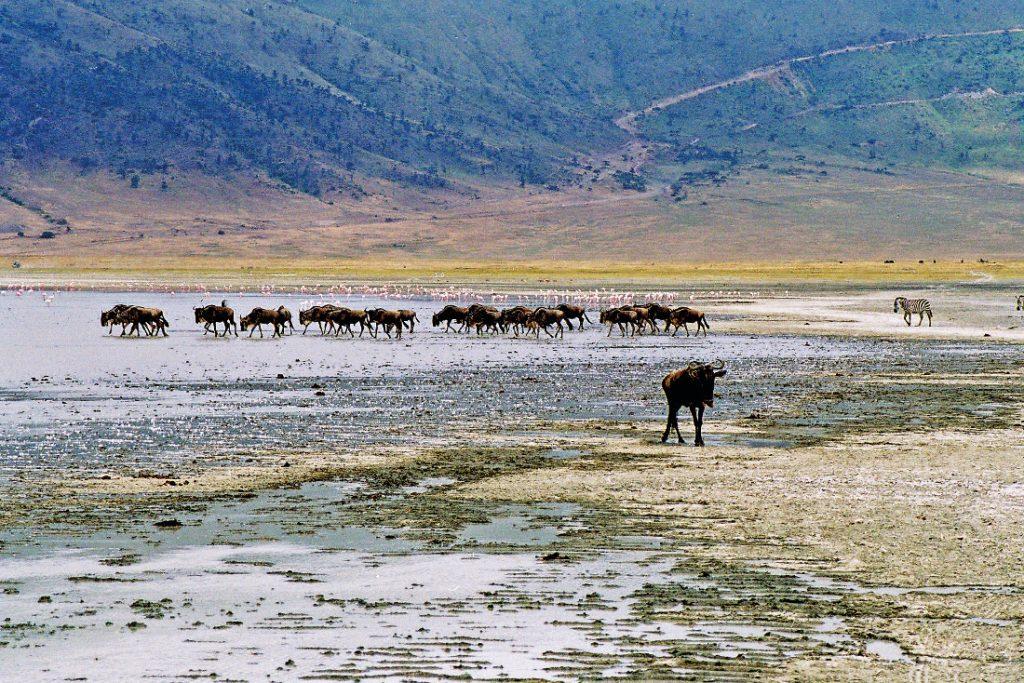 Tansania Ngorongoro Krater Iwanowskis Reisen - afrika.de