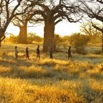 Expedition Ruaha Nationalpark