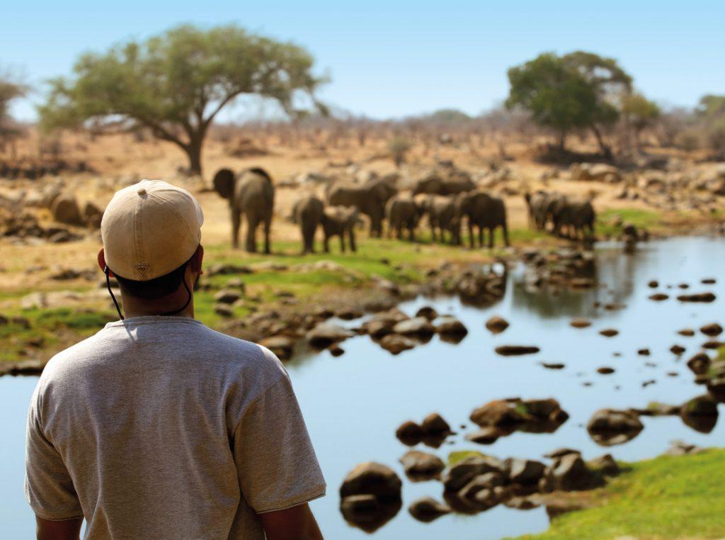 Tansania Ruaha National Park Ruaha River Lodge Fußpirsch Iwanowskis Reisen - afrika.de