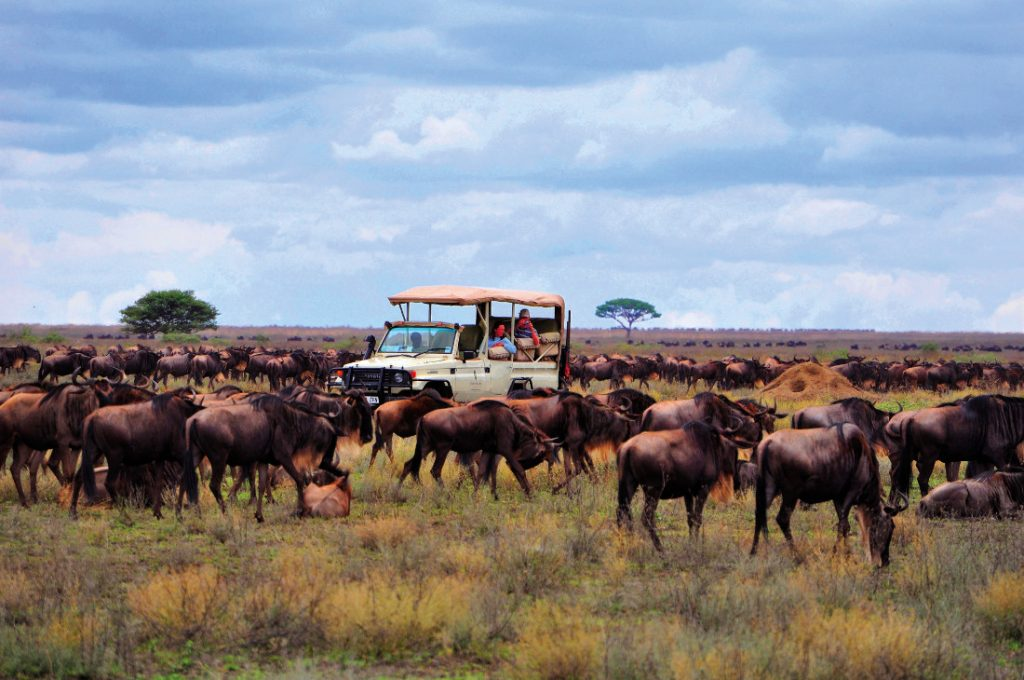 Tansania Serengeti Sanctuary Migration Camp Pirschfahrt Iwanowskis Reisen - afrika.de