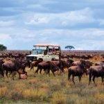Naturwunder Tansania