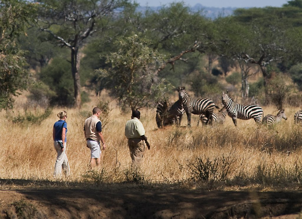 Tansania Tarangire National Park Sanctuary Swala Tented Camp Fußpirsch Iwanowskis Reisen - afrika.de