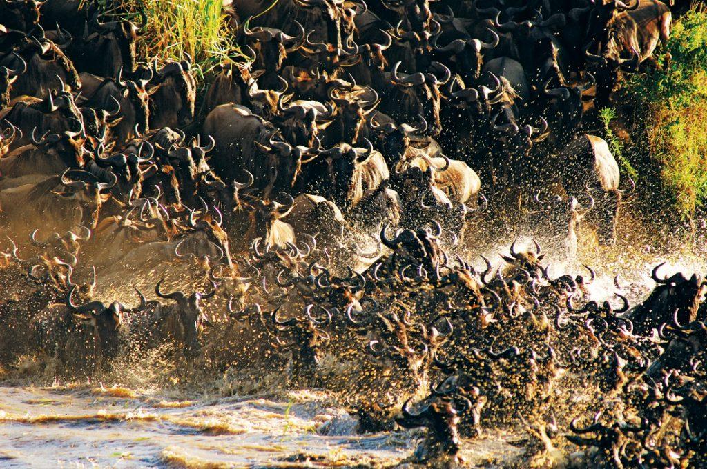 Tansania Serengeti National Park Gnuherde Wanderung Migration Iwanowskis Reisen - afrika.de