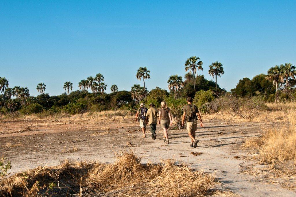 Tansania Ruaha Nationalpark Expeditionen Trekking Iwanowskis Reisen - afrika.de