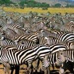 Tansania Kompakt - der Norden