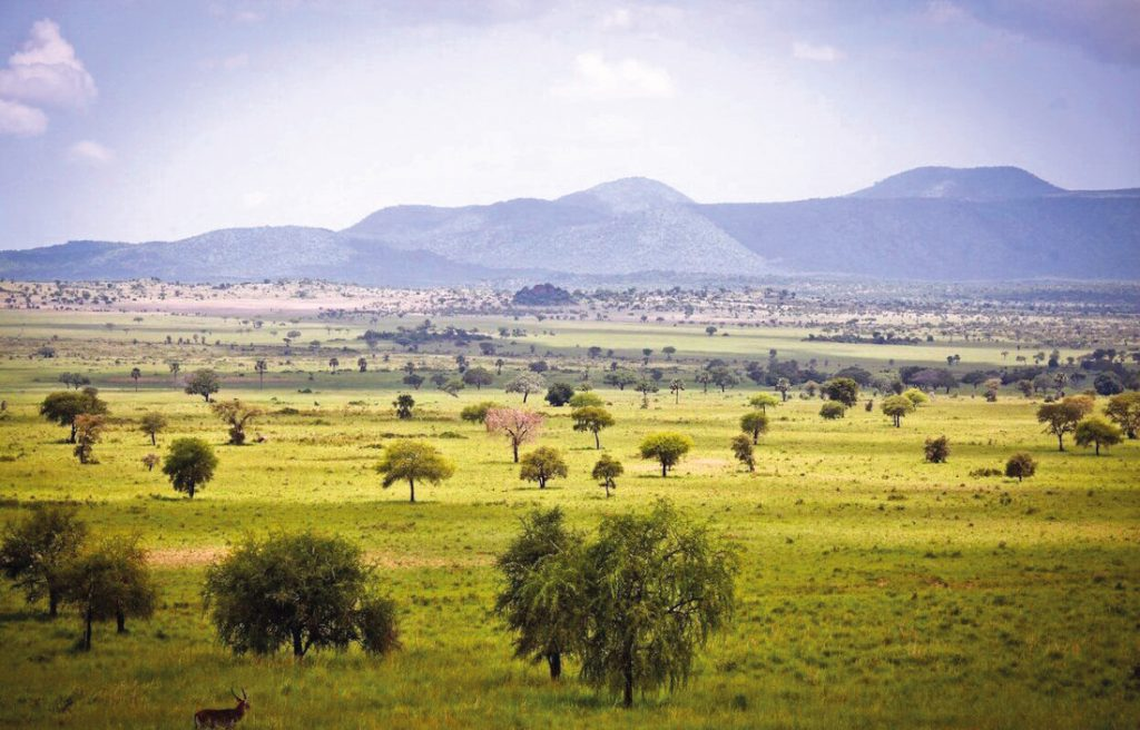 Uganda Kidepo National Park Iwanowskis Reisen - afrika.de