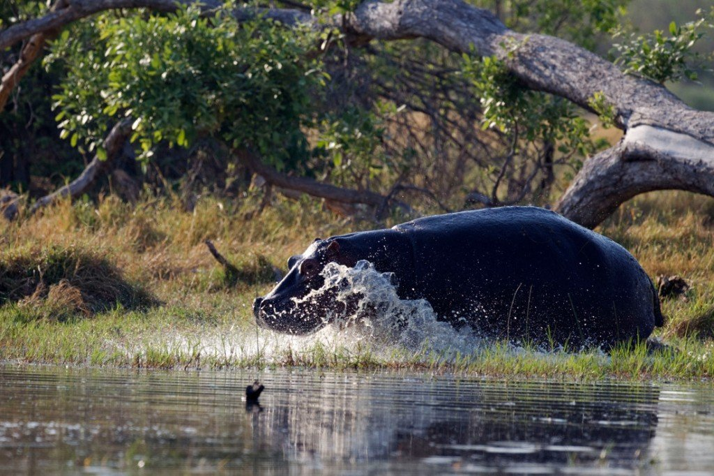 Botswana Moremi Game Reserve Camp Okuti Pirschfahrt Iwanowskis Reisen - afrika.de
