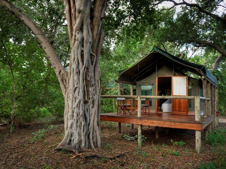 Botswana Moremi Game Reserve Camp Moremi Zeltunterkunft Iwanowskis Reisen - afrika.de