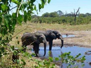 Botswana-Reiseziele Afrika-www.afrika.de