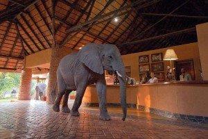 Sambia-Reiseziele Afrika-www.afrika.de