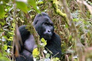 Uganda-Reiseziele Afrika-www.afrika.de