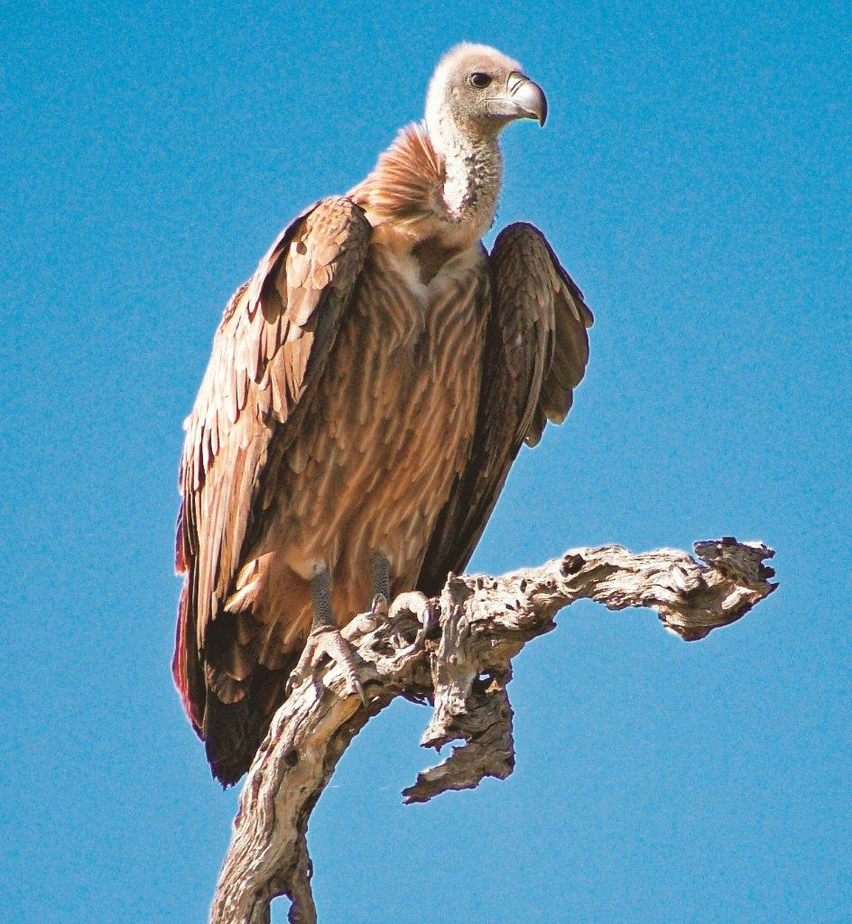 Namibia Campingsafari Drifters Geier Iwanowskis Reisen - afrika.de