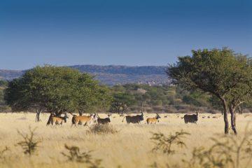 Otjimbondona Wildlife