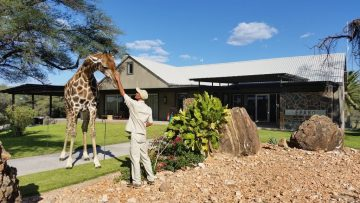 Epako Game Lodge Oscar The Giraffe