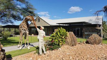 Epako Game Lodge Oscar The Giraffe
