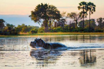 Pelo Camp Flusspferd - afrika.de Iwanowskis Individuelles Reisen