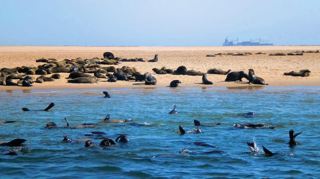 Namibia Swakopmund Laramon Seehund Delfin Bootstour Iwanowskis Reisen - afrika.de