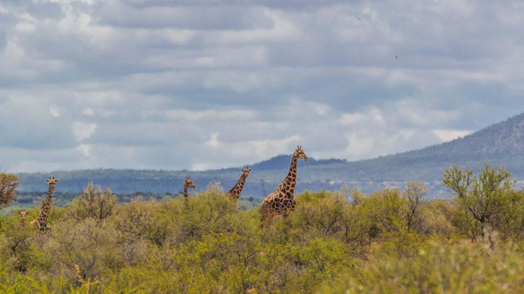 Namibia Auas Safari Lodge Pirschfahrt Iwanowskis Reisen - afrika.de