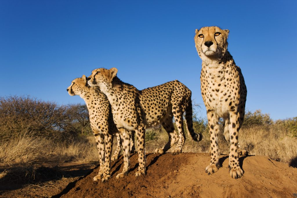 Namibia Windhoek Naankuse Lodge Geparden Iwanowskis Reisen - afrika.de