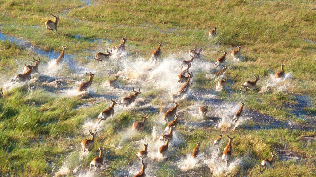 Botswana Okavango Delta Antilopenherde Iwanowskis Reisen - afrika.de