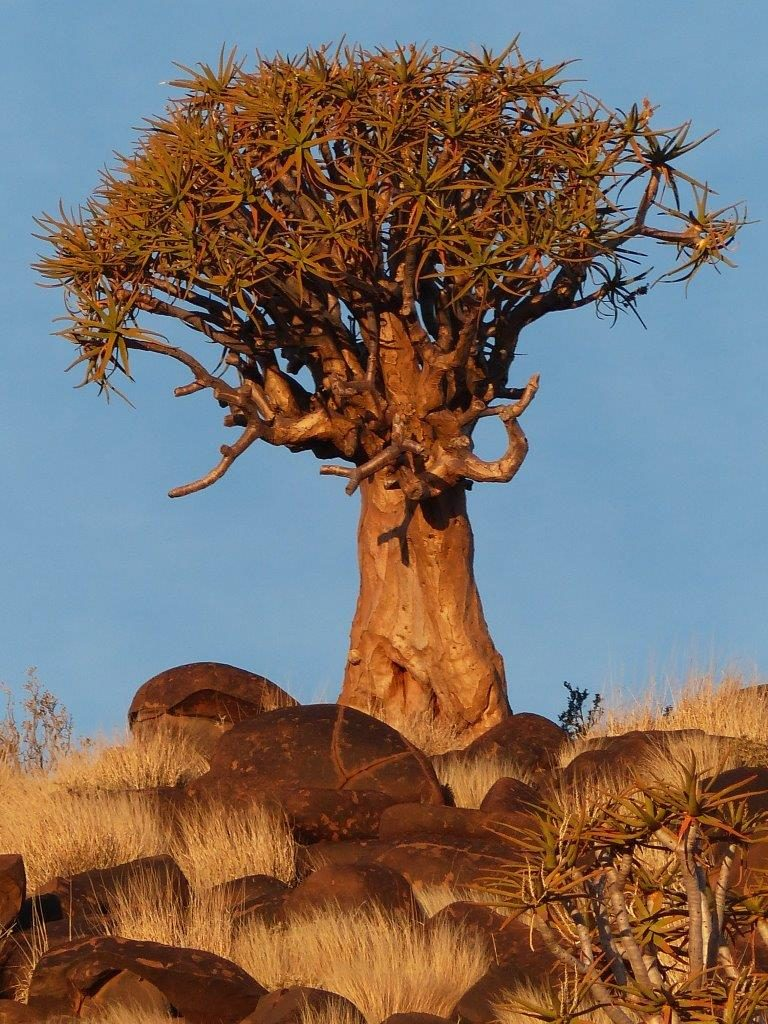 Namibia Karasburg Kleinbegin Lodge Köcherbaum Ausflug Iwanowskis Reisen - afrika.de