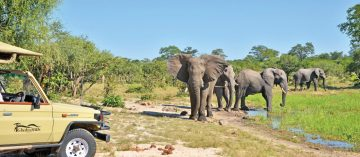 Botswana Savute Ghoha Hills Savuti Lodge Pirschfahrt Iwanowskis Reisen - afrika.de
