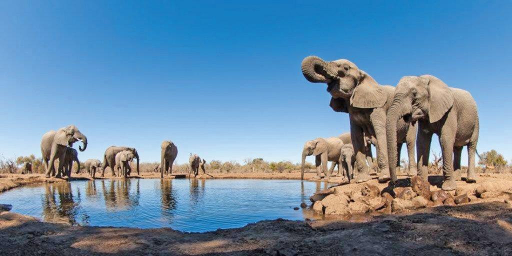 Botswana Mashatu Game Reserve Tented Camp Wasserloch Elefanten Iwanowskis Reisen - afrika.de