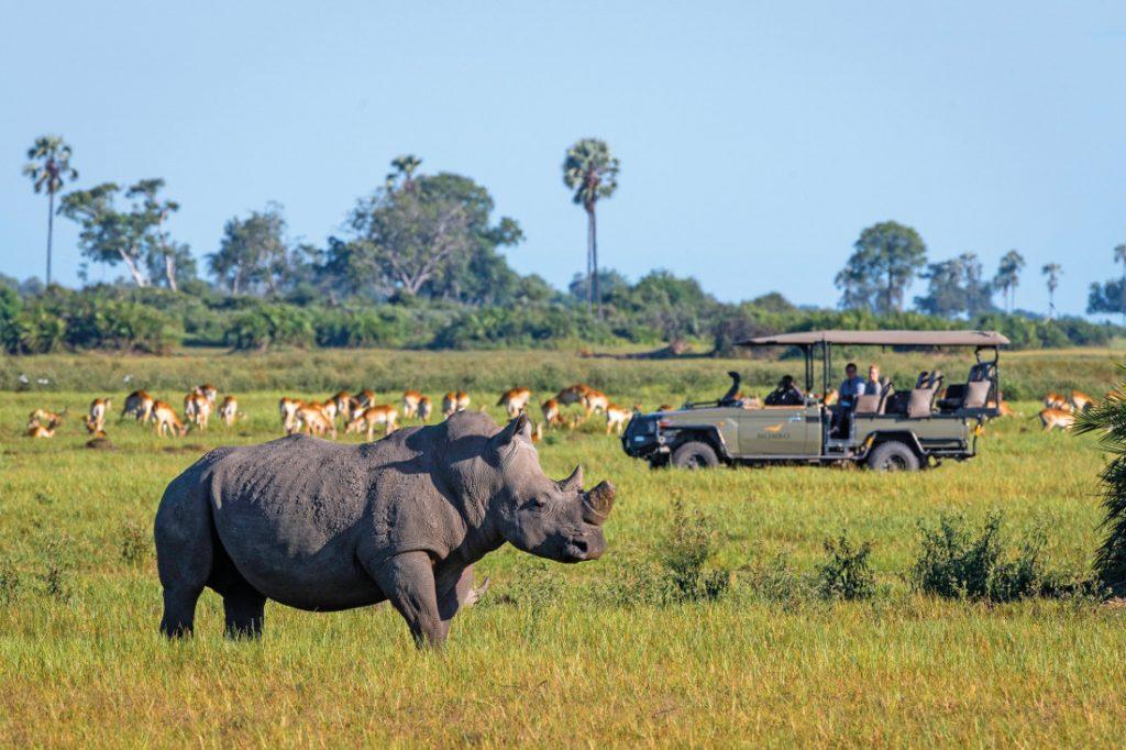 Botswana Moremi Wildreservat Mombo Camp Pirschfahrt Iwanowskis Reisen - afrika.de