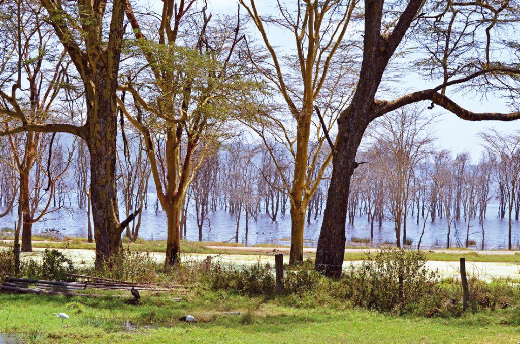 Kenia Tansania Ostafrika Explorer Safari Lake Nakuru Iwanowskis Reisen - afrika.de