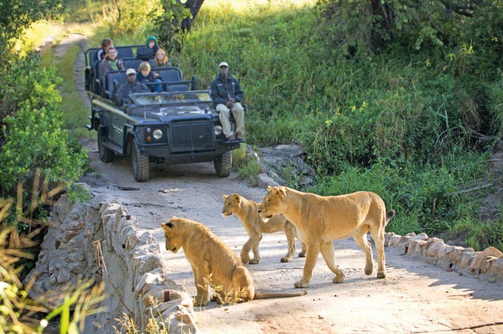 Südafrika Lion Sands Game Reserve Ivory Lodge Pirschfahrt Iwanowskis Reisen - afrika.de