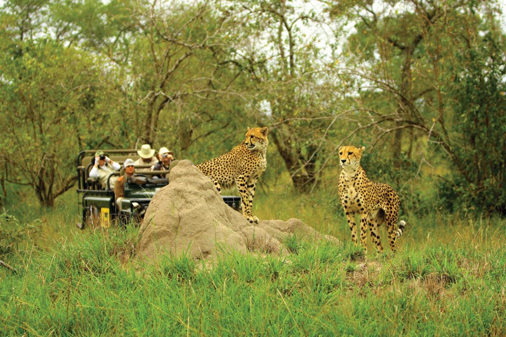 Südafrika MalaMala Game Reserve Main Camp Pirschfahrt Iwanowskis Reisen - afrika.de