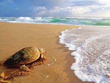 Südafrika Elephant Coast Thonga Beach Lodge Schildkrötenausflug Iwanowskis Reisen - afrika.de