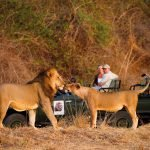 Sambia South Luangwa National Park Lion Camp Pirschfahrt Iwanowskis Reisen - afrika.de