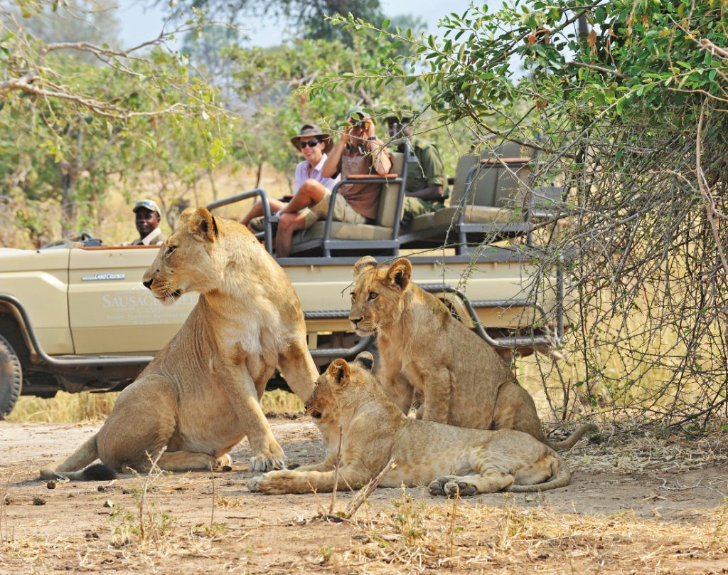 Sambia Lower Zambezi National Park Potato Bush Camp Pirschfahrt Iwanowskis Reisen - afrika.de